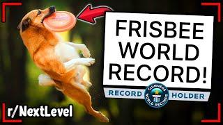 r/NextLevel   *WORLD RECORD*  FURTHEST FRISBEE DOG CATCH!