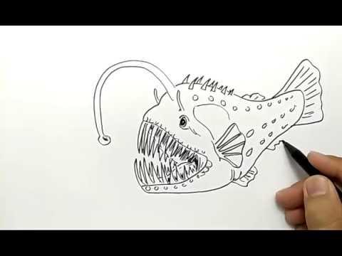 Cara Menggambar Ikan Laut Dalam Youtube