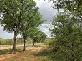 36 ha Game Farm for sale Limppopo Naboomspruit Mookgopong