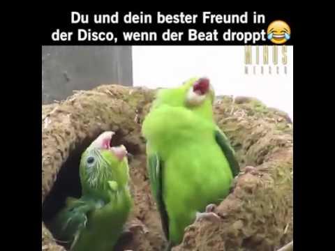 Vogel dance
