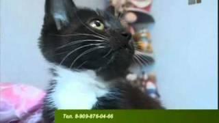 Зверская жизнь.Общительная кошка