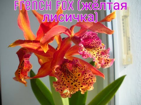 Орхидеи Каттлеи,Камбрии,Зигопеталлум содержание и уход ❤️