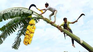 Gold Hera Pheri New Funny Comedy Video 2021 fully entertainment video | Bindas Fun Masti