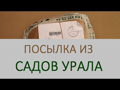 Как я заказывала саженцы земляники в Садах Урала. Что выросло