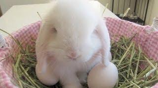 Easter Bunny Rabbit Lay Eggs!