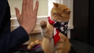 A street cat named Bob | Уличный кот по имени Боб | booktrailer