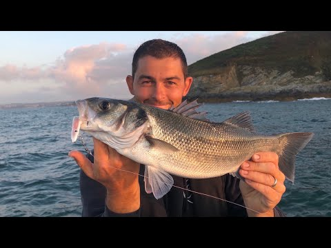 Lure Fishing For Bass - Bass Fishing Cornwall