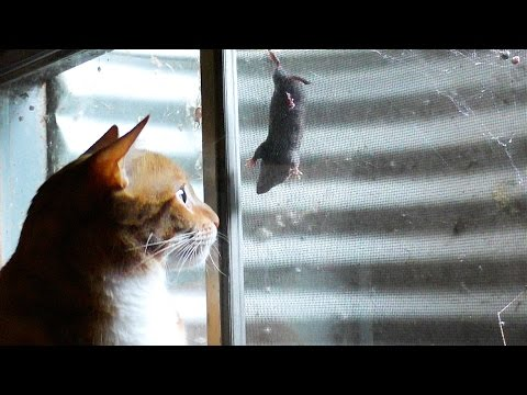 """It's a Cat and """"Mouse"""" Game..."""