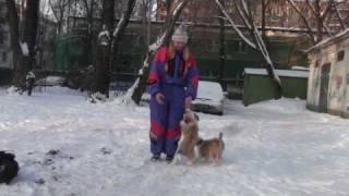 Китайцы на зимней прогулке(, 2010-02-19T10:54:01.000Z)