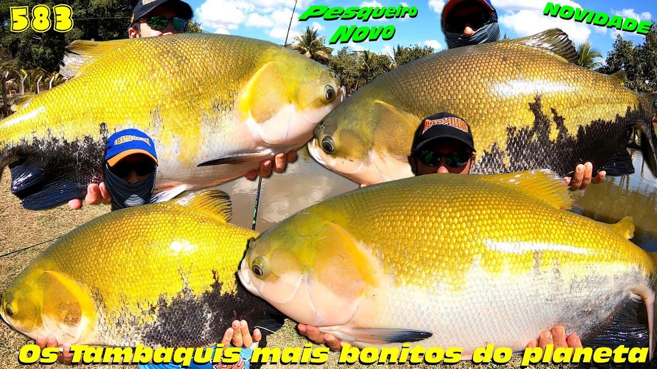 Estância Ventura - A casa dos Tambaquis em Goiás - Fishingtur na TV 583