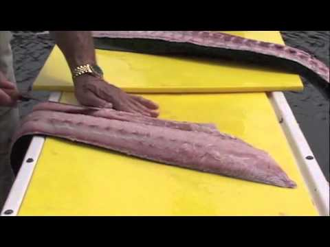 How To Clean Dolphin-Mahi Mahi By Captain Vincent Russo