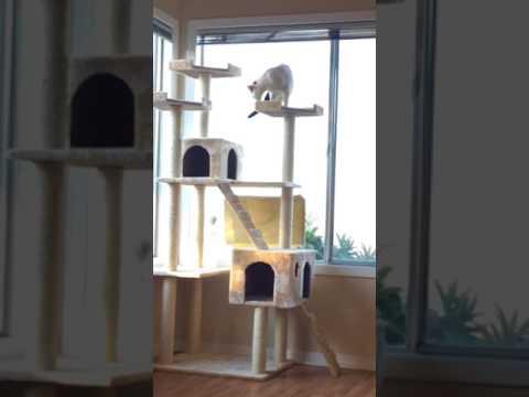 handicap cat climbing jungle gym - Cat Jungle Gym