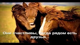 Моя Любовь к Лошади... I love horses.mp4