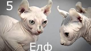най скъпи котки Супер подборка