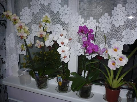 Как заставить орхидею цвести?Да запросто!!!!!