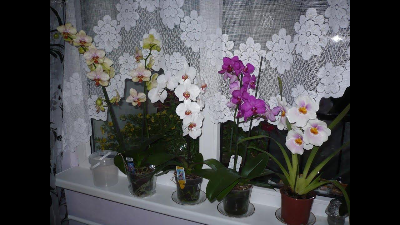 заставить цвести орхидею