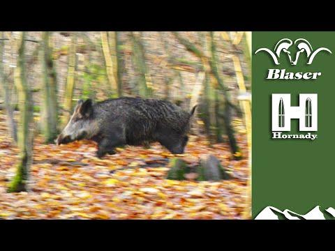 driven-wild-boar:-a-beginner's-guide