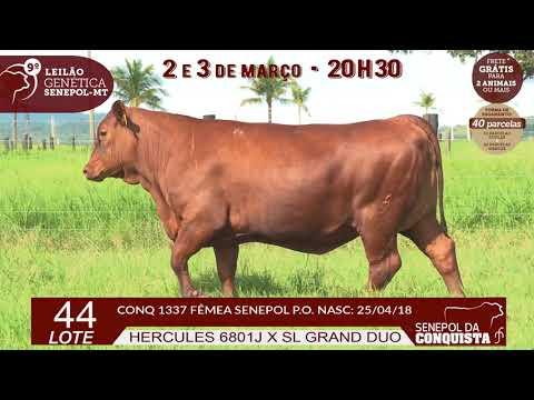 LOTE 44 CONQ 1337