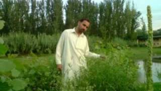 CHARSADDA video ismaeel khan
