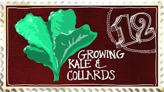 Growing Kale and Collard Greens - Suburban Homestead Ep12