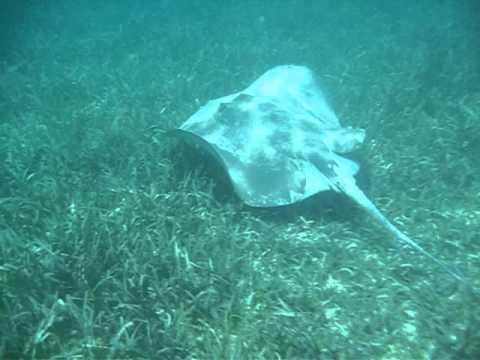 Marine Biology - MU Study Abroad