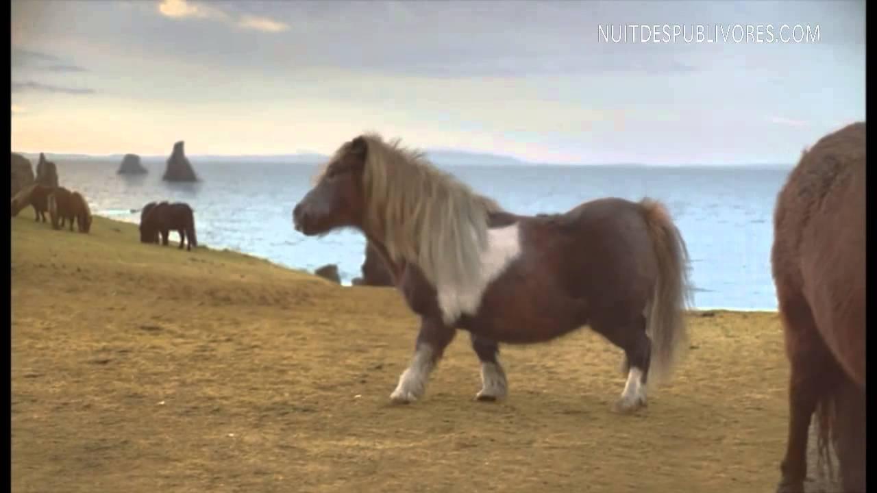 poney moonwalk