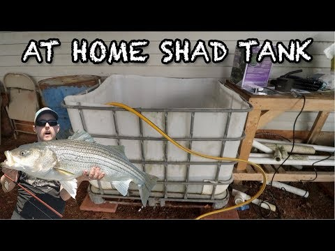 Building An AT-HOME Shad Bait Tank From A 275 Gallon Water Storage Tank