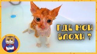 Купаем спасенного котеночка. Имя Кексик как вам?