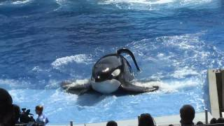 One Ocean premiere at SeaWorld Orlando - New Shamu show