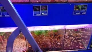Покупка аквариумных рыбок гурами, барбус! Дохляк в аквариуме!