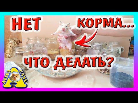 Вопрос: Как кормить хомяков?