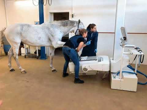 A Horse Center Laboratório e Clínica Veterinária em Hamburgo