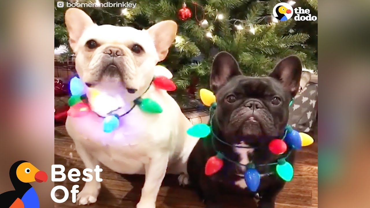 Dogs And Other Animals With Holiday Spirit Holiday Animal