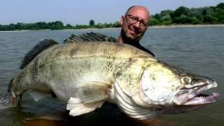 Рекордный судак 22кг # Самая большая в мире пойманная Рыба