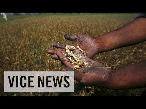VICE News Daily: Indian Farmers Commit Suicide Due to Ruined Crops