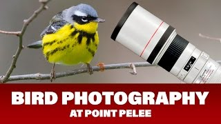 bird photography at point pelee festival of birds 2016 day 3