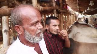 গরুর দাম জেনে নিন/ গাবতল…