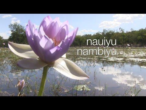 Naiyu Nambiyu - DALY RIVER COMMUNITY