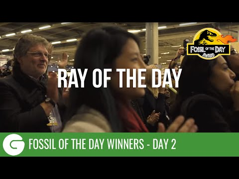 COP21: The Second Ever 'Ray of the Day'