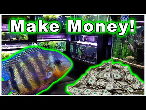 Breeding Fish For Profit: Why Do It And How To Sell Your Fish To Maximize Profit!