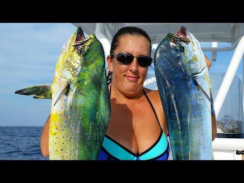 Panama City Beach Fall Fishing For Mahi Mahi