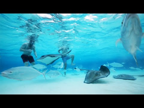 STINGRAY CITY | CAYMAN ISLANDS' MOST POPULAR ATTRACTION