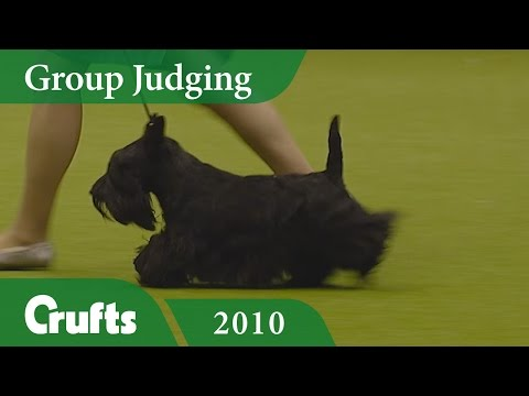 Scottish Terrier wins Terrier Group Judging at Crufts 2010 | Crufts Classics