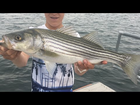 Lake Pleasant STRIPER FISHING! (Phoenix, AZ) *Arizona Day 1*