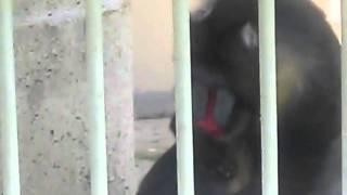 Korean Zoo surprise