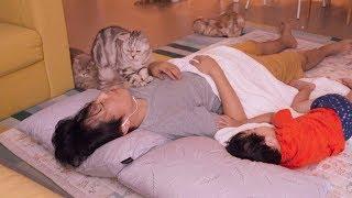 Что происходит, когда кошки и хозяева спят вместе