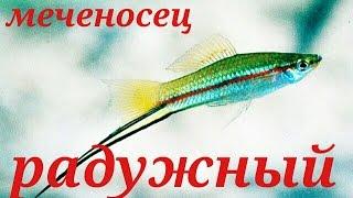 Аквариумные рыбки Меченосец радужный .
