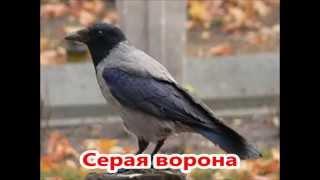 Оседлые птицы России. Презентация 4 класс.