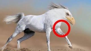 7 Animales Que Si No Hubieran Grabado Nadie Los Creeria