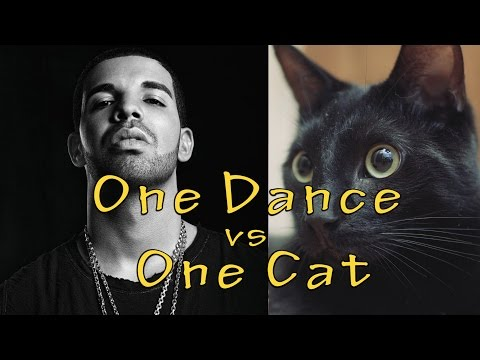 One Dance - Drake (Cat Version - One Cat)
